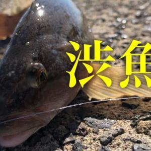 食い気のない渋魚の日