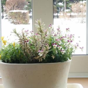 雪の日の花
