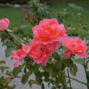 台風前の庭の花々