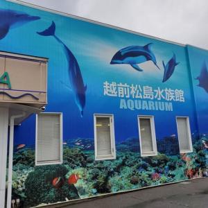 【福井への旅④】民宿なかじま~越前松島水族館~帰宅