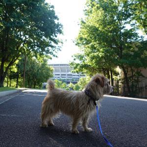 長かったな~我が家のワンコとずっと一緒のゴールデンウイークの続き「新横浜公園でノーフォークと出会って一緒にぶら~り」と 「多摩川台公園を散策」