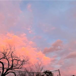 夕焼け雲でエアお花見🌸
