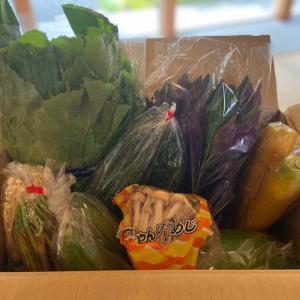 初めての野菜も!【楽天】沖縄野菜詰め合わせ