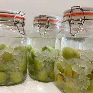 タイ人も大好きな梅酒を北タイ産の梅で作ってみよう!