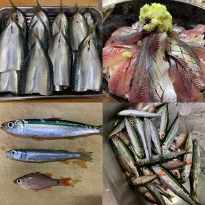 2021年9月23日 北条湾釣行 釣れた魚種 #城ヶ島 #三崎港 #北条湾 #釣り #...