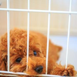 愛犬の大腸炎を本葛粉で治す方法