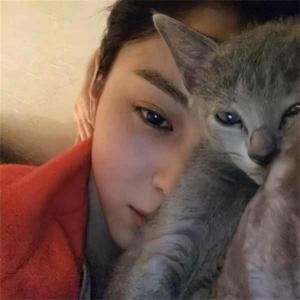 【韓国俳優】愛猫にメロメロ!猫を飼っている韓国芸能人