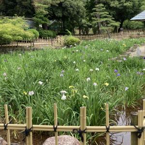 今日の鶴舞公園 (◕ᴗ◕✿)