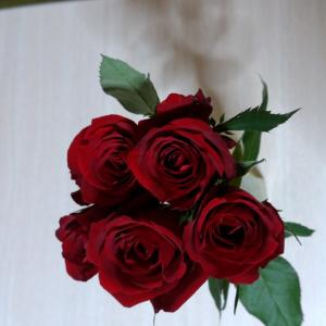 薔薇のある生活