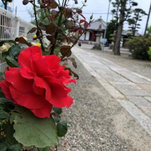 きれいな花には棘がある