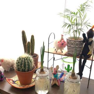 観葉植物|我が家のグリーンネックレス