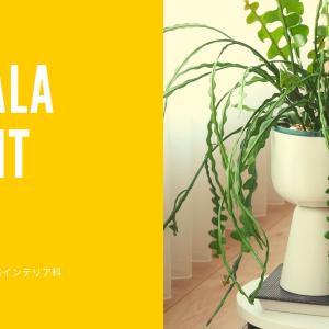 【入れるだけ】植物がオシャレになる鉢カバー【イッタラのプラントポット】