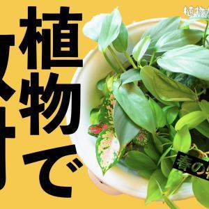 春の新入り観葉植物を紹介【楽天で購入】