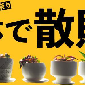 オシャレな鉢・特集。「鉢×植物」を楽しんでみませんか?【プチプラ編】