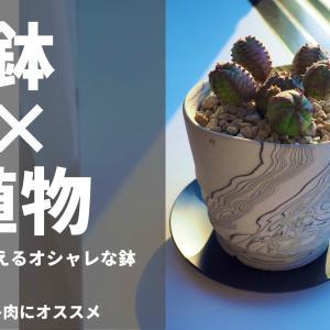 オシャレな鉢・特集!鉢×植物を楽しんでみませんか?【デザイン鉢編】