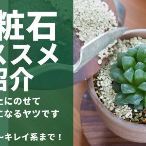 【化粧石】オススメの7種類を紹介!植物にのせてオシャレにしよう!