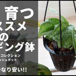 植物がよく育つ!オススメのハンギング鉢【BANKSコレクション・BCメッシュポット】