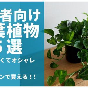【初心者向け】育てやすい観葉植物・5選【オシャレでお手頃価格】