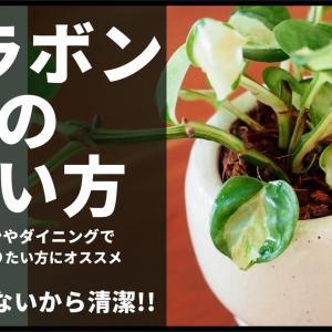 土を使わないで観葉植物を育てる!ベラボンの使い方&注意点