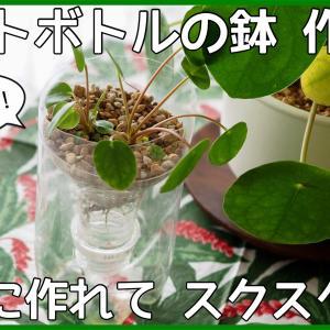 【ペットボトル鉢のススメ】簡単に作れて、よく育つ!【作り方を解説】
