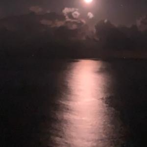 月の道 ~熱海の絶景コレクション