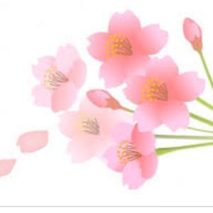 桜は………、咲く?咲かない?