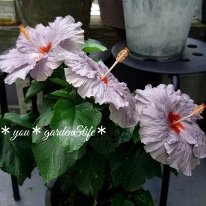 *大好きな渋いお花♡*寄せ植の草花の名前*