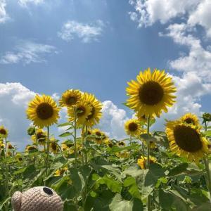 夏休みです(・∀・)