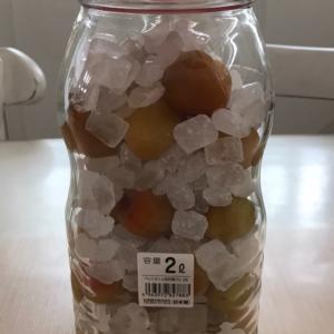 今年も梅シロップ作りました