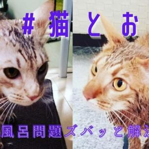 猫に『お風呂』は必要?