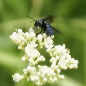 再び幸せの蜂を求めて