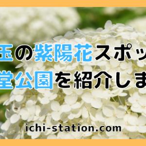 【埼玉の紫陽花スポット】権現堂公園を紹介します!