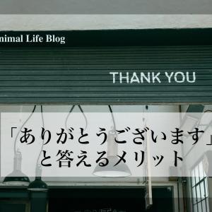 褒められたら素直に「ありがとう」と伝えよう