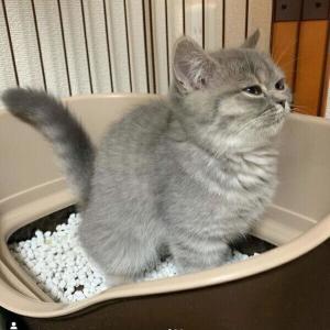 虚無の顔がクセになる! 猫が「トイレで踏ん張る姿」
