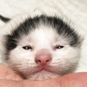 「命の期限は明日まで」虐待され保健所に持ち込まれた子猫