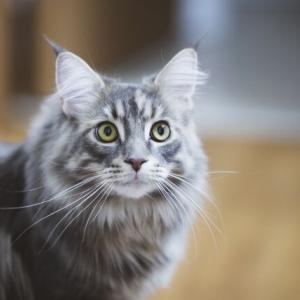 """高齢猫の飼い主が知っておくべき""""病気のシグナル"""""""