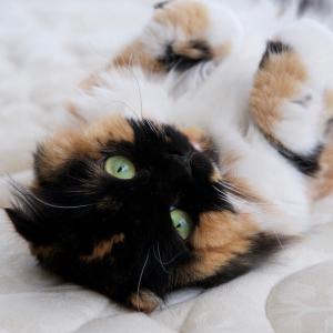 猫が「早朝に飼い主さんを起こす」理由は?