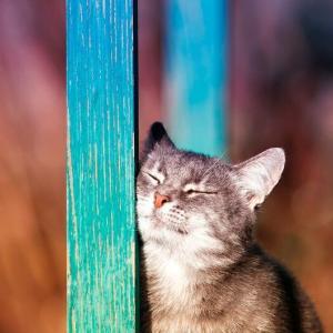 ペットロスによる心の癒しにも。「猫の油彩肖像画」
