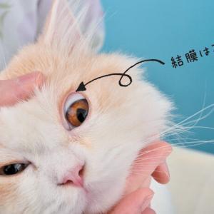 早めの治療が大切! 猫がかかりやすい「結膜炎」「角膜炎」と気づく方法