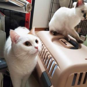 飼い主が入院「取り残された猫の運命は?」