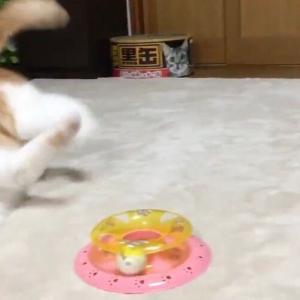 「ニャん……だと……」初めてマンウィズを見た猫のリアクション