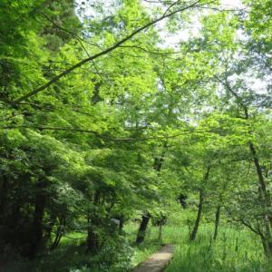 大好きな「こそあどの森の物語」がミュージカル上演されます!!