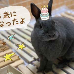 【BLOG】颯空(そら)くん3歳の誕生日