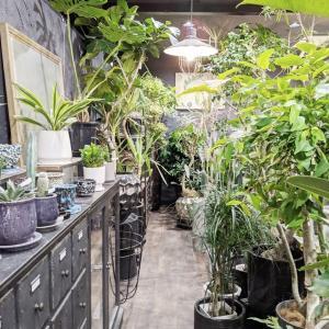 観葉植物を探しに、福岡市西区の「エフェクト」へ。