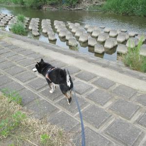 愛犬と河原をお散歩♪