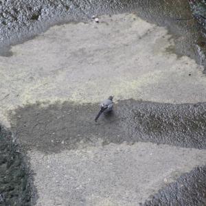 川べりの野鳥