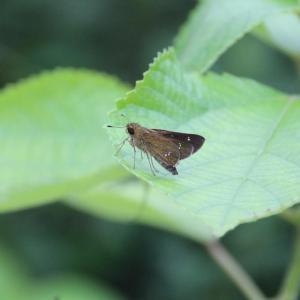 葉の上の小さき虫たち