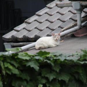 屋根の上のネコ