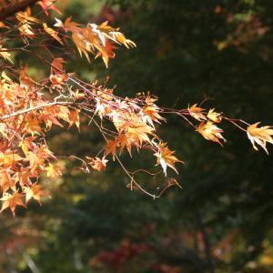 塔のへつり周辺の紅葉