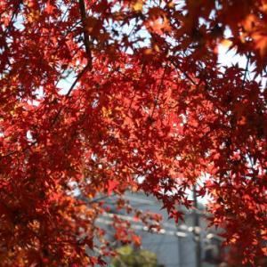 水路と紅葉